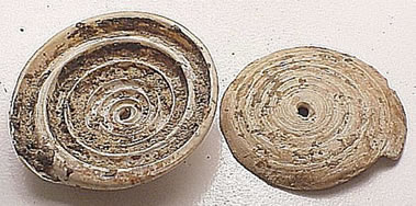 Figure 2. Top whorls of conus shells pierced for wearing.